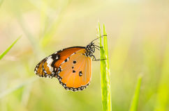 Butterfly in the nature Stock Photography