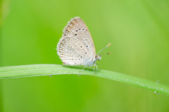 Butterfly in the nature Stock Images