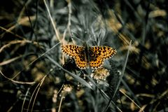 Butterfly, Nature, Living Nature Royalty Free Stock Photography