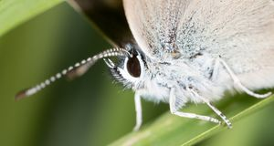 Butterfly in nature. macro. In the park in nature royalty free stock photography