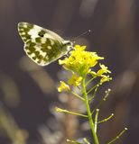 Butterfly in nature. macro. In the park in nature royalty free stock photo