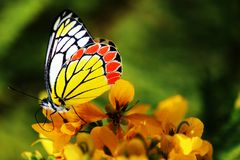 Butterfly - Nature's own drawing. A beautiful butterfly looks like a crayon drawing of nature royalty free stock photos