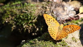 Butterfly nature scene stock footage