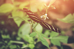 Butterfly in nature. Shallow Depth of field with instgram themed Royalty Free Stock Photography
