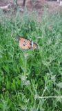 Butterfly. Nature sitting close up beautiful Royalty Free Stock Photo