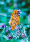 Butterfly in nature sitting on flower Royalty Free Stock Images