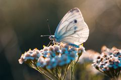 Butterfly in nature sitting on flower Stock Photos
