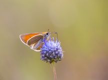 Butterfly in nature sitting on flower Stock Photo