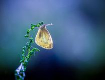 Butterfly in nature sitting on flower Royalty Free Stock Photos