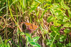 Butterfly in nature. Stock Photography