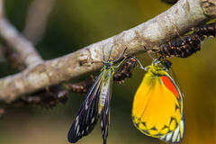 Butterfly in nature on tree Stock Photo