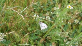 Butterfly in nature. The butterfly was taken in a small Bulgarian farm stock video footage