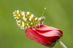 Butterfly in nature wild life. Butterfly on the flower. Butterfly in nature stock photography
