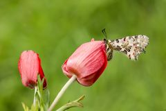 Butterfly in nature wild life. Butterfly on the flower. Butterfly in nature stock photos