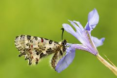 Butterfly in nature wild life. Butterfly on the flower. Butterfly in nature stock photo