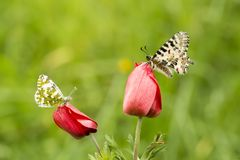 Butterfly in nature wild life. Butterfly on the flower. Butterfly in nature royalty free stock photos