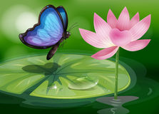 A butterfly near the pink flower at the pond Stock Photography