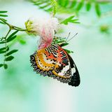 Butterfly nectar. Royalty Free Stock Images
