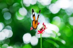 Butterfly nectar. Stock Photo