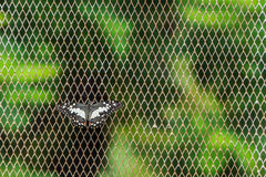 Butterfly on Netted Background. Closeup Royalty Free Stock Photography
