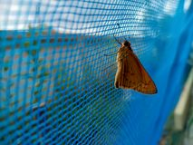 Butterfly and netting royalty free stock image