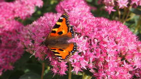 Butterfly. Nice colored butterfly on the flower royalty free stock photo