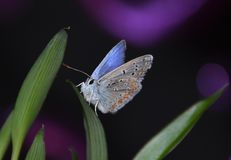 Butterfly night royalty free stock images
