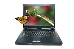Butterfly on notebook's screen. Showing a caterpillar on a plant royalty free stock photography