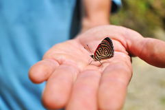 Butterfly. With numbered wings on human hand Royalty Free Stock Images