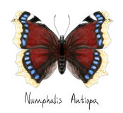 Butterfly Numphalis Antiopa. Watercolor imitation. Royalty Free Stock Photography