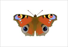 Butterfly Nymphalis io L isolated Stock Photo