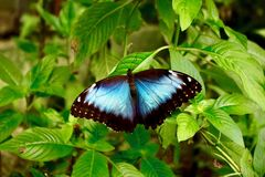 Free Butterfly Observatory, Lake Arenal, Costa Rica, Central America Royalty Free Stock Images - 209337469