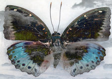 Butterfly. Old grunge butterfly background image stock photography