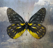 Butterfly. Old grunge butterfly background image stock photos