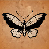 Butterfly on an old paper background Royalty Free Stock Photo