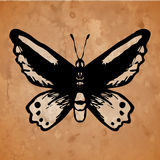 Butterfly on an old paper background Stock Photography