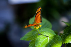 Free Butterfly On A Flower Stock Photo - 12544230