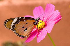 Free Butterfly On A Flower Stock Photography - 9818302