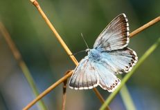 Free Butterfly On Crossroad Stock Images - 6153874