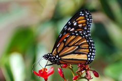 Free Butterfly On Flower Stock Photos - 11945663