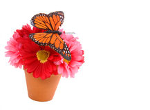 Free Butterfly On Flower Stock Photos - 12647473
