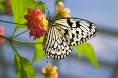 Free Butterfly On Flower Stock Images - 1411594