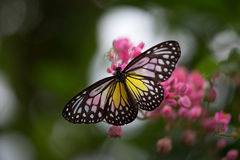 Butterfly On Flower Stock Image