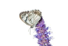 Free Butterfly On Flower 6 Royalty Free Stock Photo - 14169565