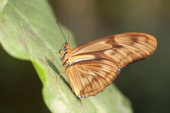 Free Butterfly On Leaf Royalty Free Stock Photos - 14669748