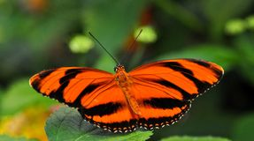 Free Butterfly On Leaf Stock Image - 9463861