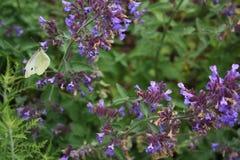 Free Butterfly On Purple Flowers Stock Photo - 94078280