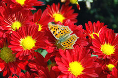 Free Butterfly On The Flower Stock Photography - 7736472