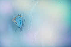 Free Butterfly On Toned Background Royalty Free Stock Images - 28709089