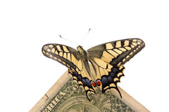 Butterfly on one dollar. Butterfly Papilio Machaon sitting on one dollar Stock Photography